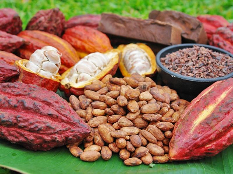 Cacao chiapaneco, entre los 50 mejores del mundo