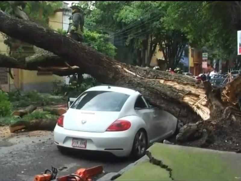 Cae árbol sobre automóvil en Colonia Condesa