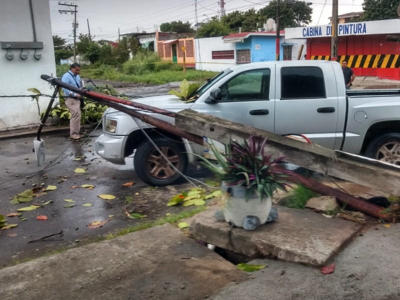 Cae luminaria y árbol sobre un automovil.