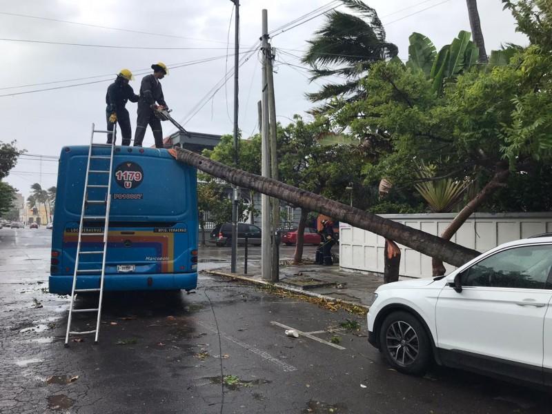 Cae palmera sobre un camión en Veracruz