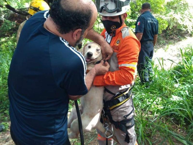 Cae persona a Río Sabinal cuando rescataba a perrito