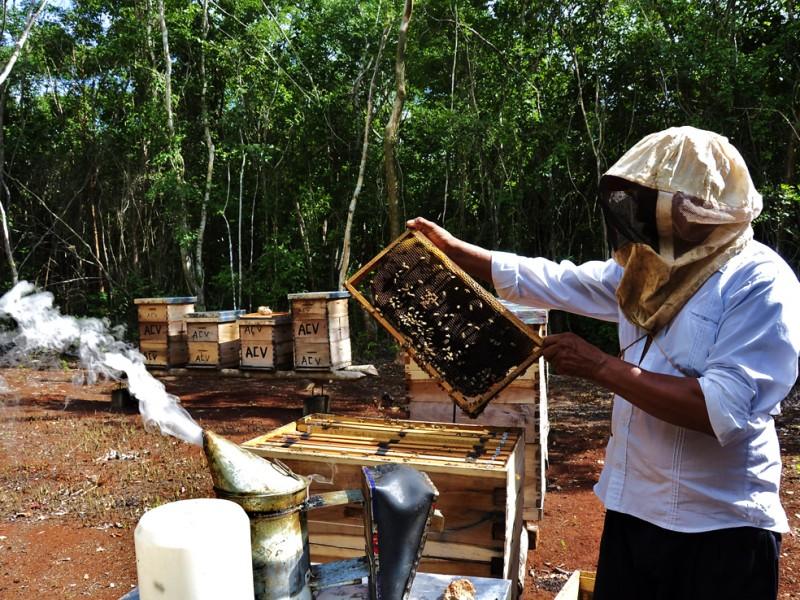 Cae producción de miel en el Soconusco