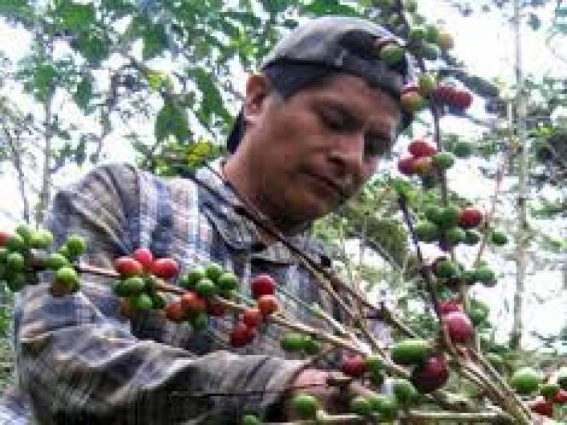 Cafeticultores en crisis