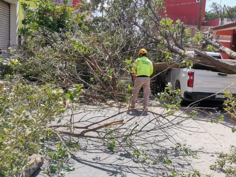 Caídas de árboles y apagones en Juchitán por fuertes vientos
