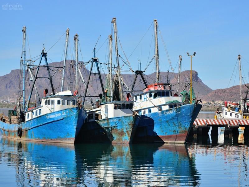Camaroneros sufrirán embargo pesquero de Estados Unidos