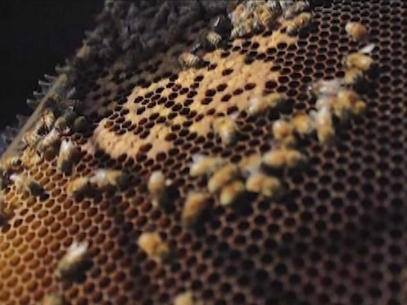 Cambio climático bajó 50% producción de miel en Michoacán