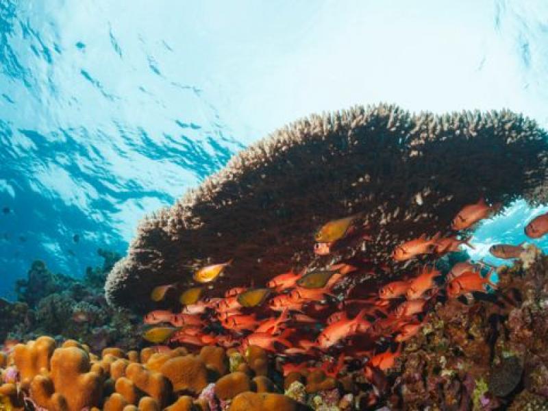 Cambio climático causa impacto inmediato en especies marinas