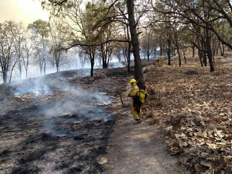 Cambio Climático incrementará riesgo forestal en la Primavera