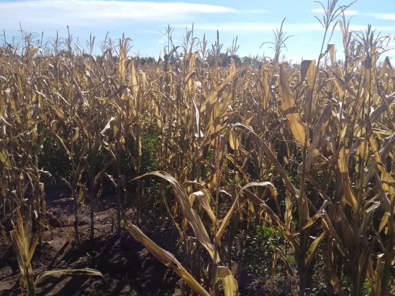 Cambio climático podría traer más heladas: Sonora