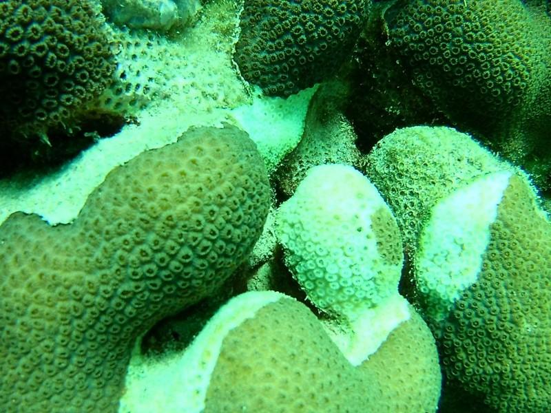 Cambio climático y antropogénicos, amenaza de arrecifes