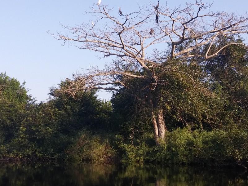 Cambio de uso de suelo, amenaza de manglares