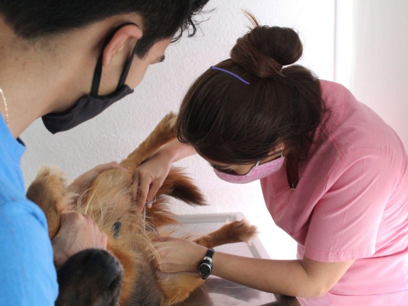 Campaña de esterilización de mascotas al 2X1 durante agosto