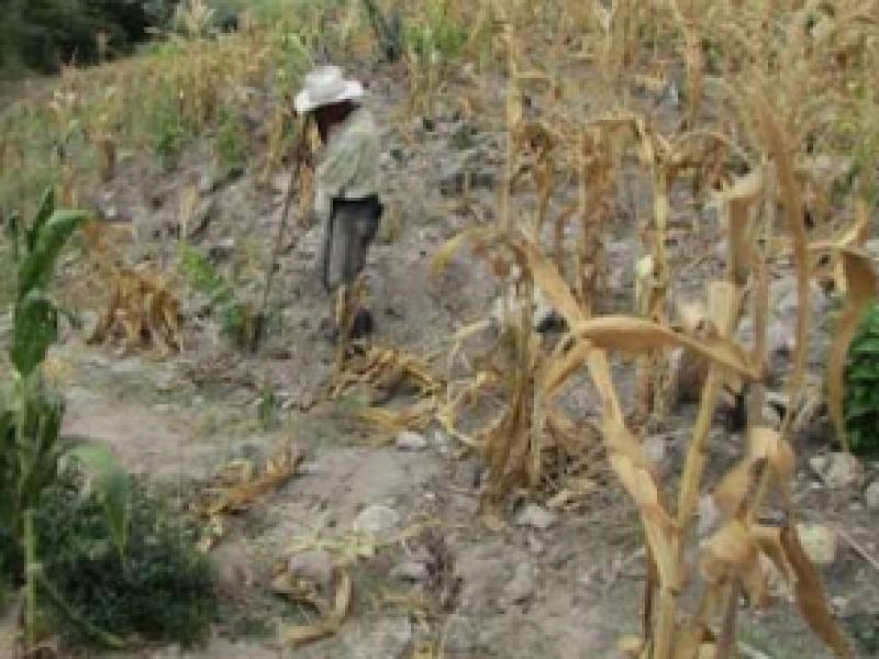 Campo chiapaneco resiente efectos del cambio climático
