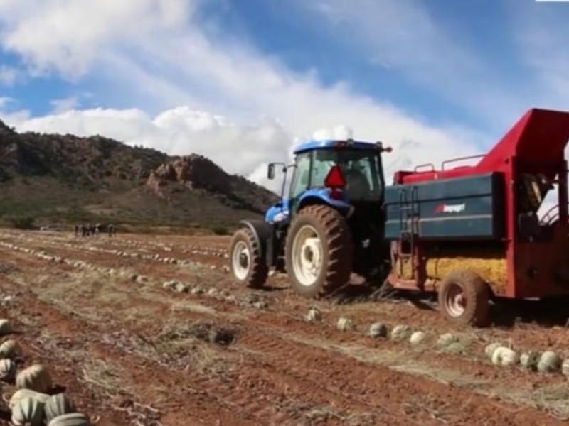 Campo zacatecano en primer lugar nacional de crecimiento