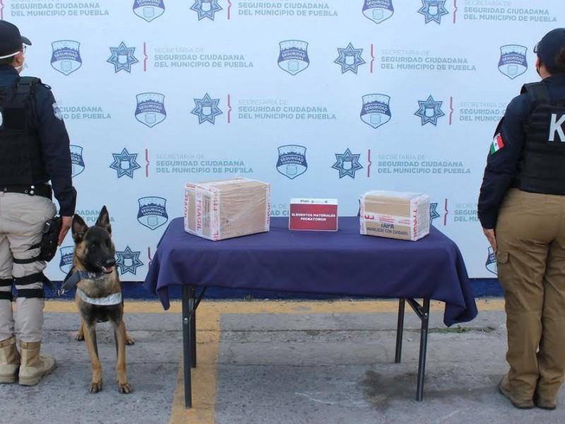 Canino de SSP halla paquetes con droga en la CAPU
