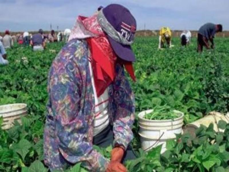 Capacitan a más de 100 médicos de campos agrícolas: COVID19