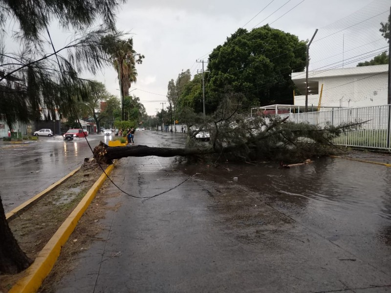 Casi 20 árboles caídos por lluvia vespertina