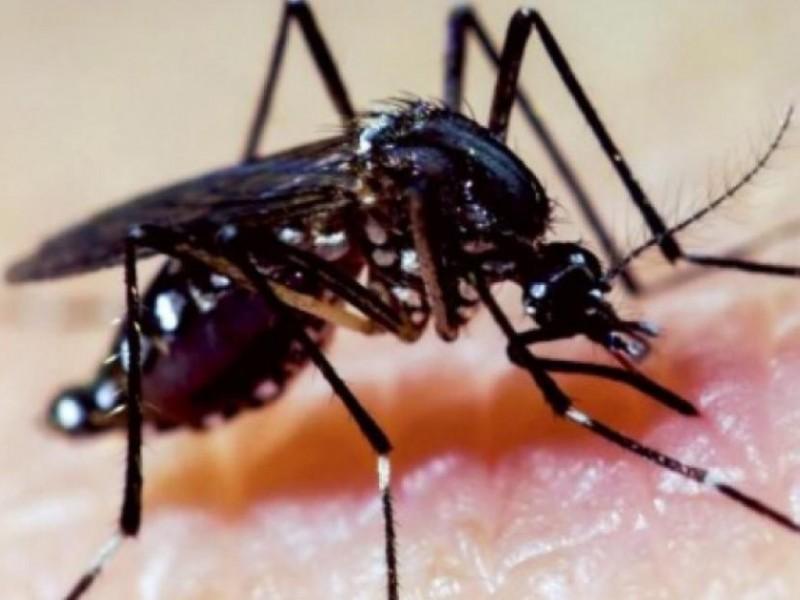 Casos de Dengue siguen aumentando en Jalisco