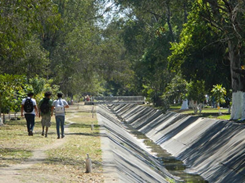 Cd. del Valle denuncia falta de poda de árboles