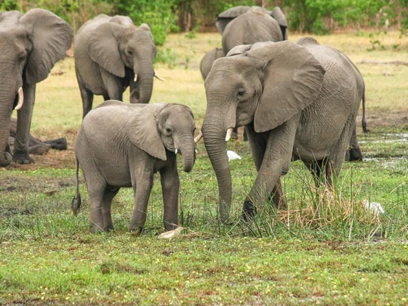 Celebran el mundo el día de los elefantes