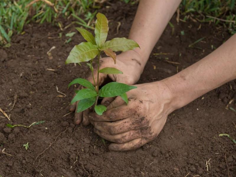 Celebrarán el Día del Árbol reforestando
