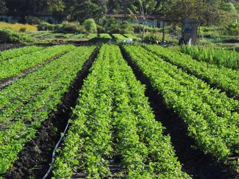 Certificaciones y unificación de productores metas de SADER