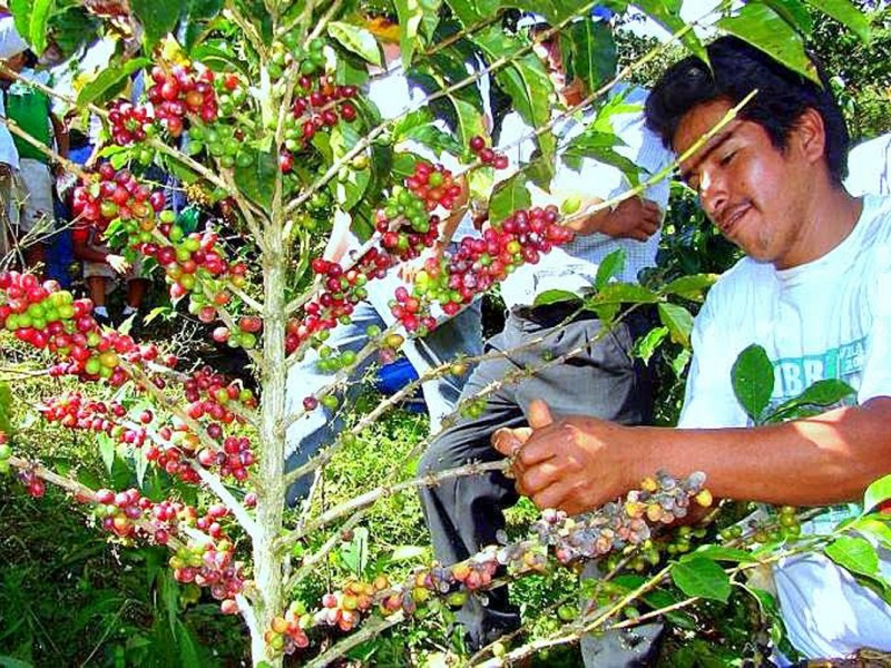 Chiapas repunta en producción del campo