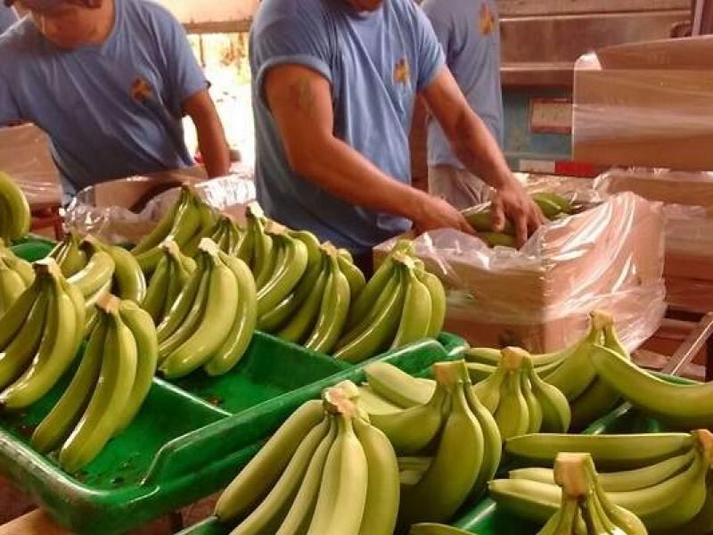 Chiapas se destaca en producción de frutas tropicales