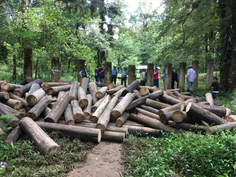 Chiapas sufre reducción de superficie forestal