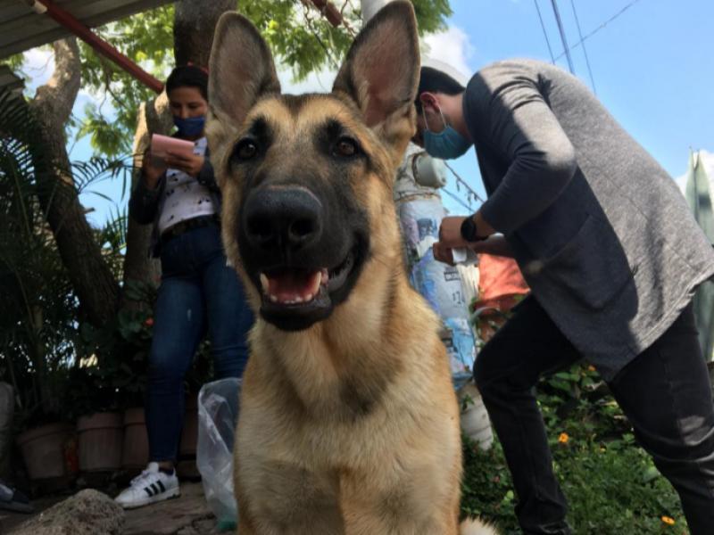 Cierran filas contra la sobrepoblación canina y felina en Zamora