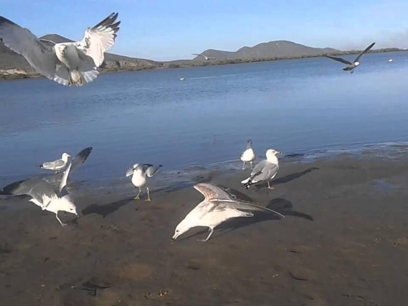 Cierran por completo playa El Maviri, permanecerá cerrada durante SS