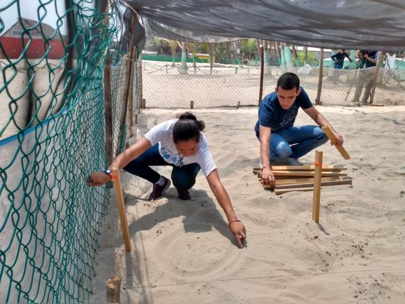 Cierre de playas, beneficia temporada de tortugas