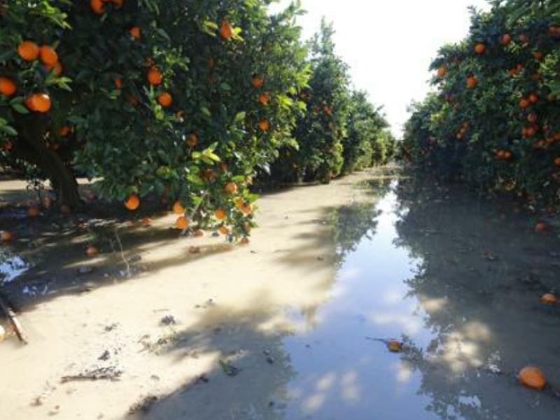 Cítricos y maíz, los más afectados por FFN6