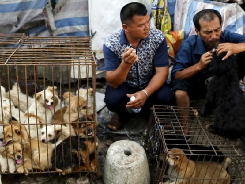 Ciudad de China realiza feria de carne de perro