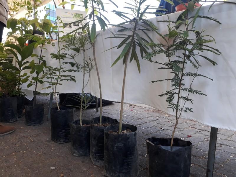 Ciudadanos adoptan más de 3 mil árboles