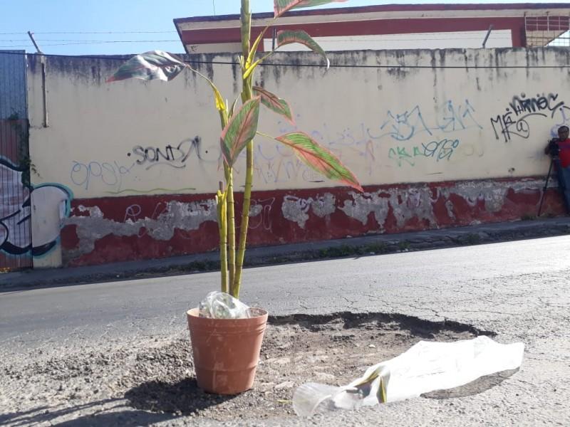 Ciudadanos de Tepic decoran bache con planta