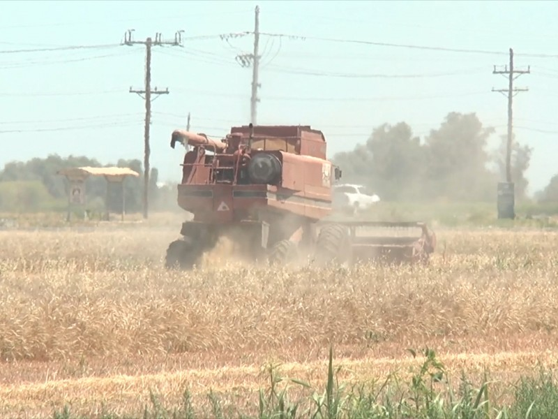 Clima y falta de agua afecta cultivos