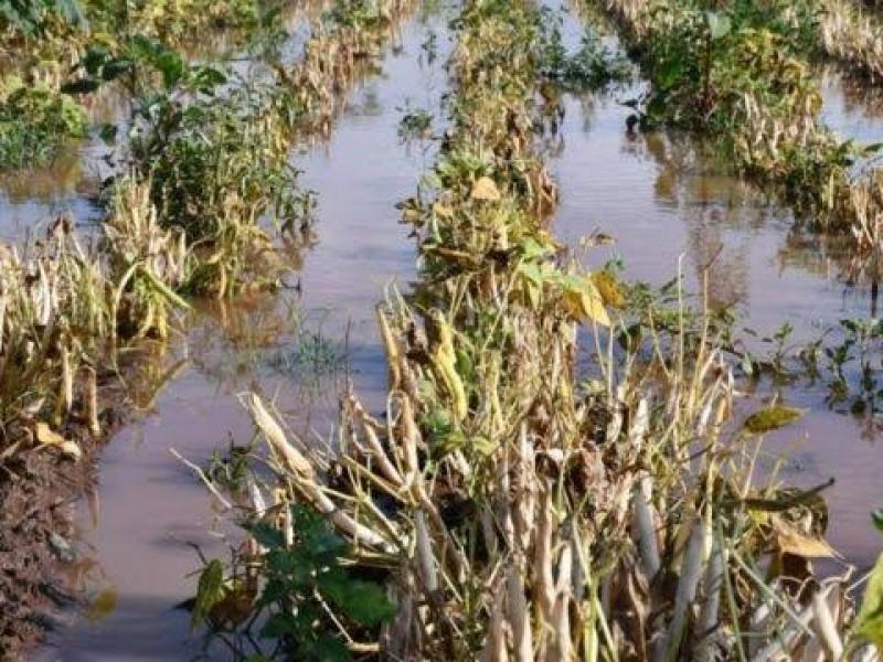 CNC pide declarar zona de desastre al campo nayarita