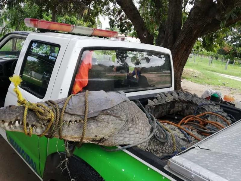 Cocodrilo ATEMORIZABA en Oaxaca, ¡ya lo atraparon!