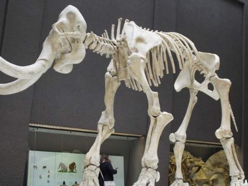 Colmillo de mamut permite reconstruir sus pasos hace 17.000 años