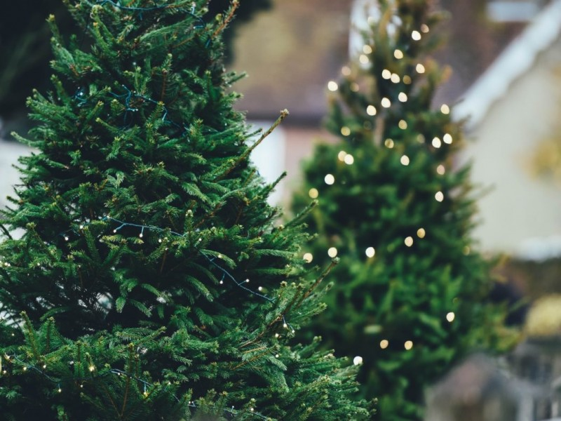 Colocarán centro de acopio para árboles de navidad