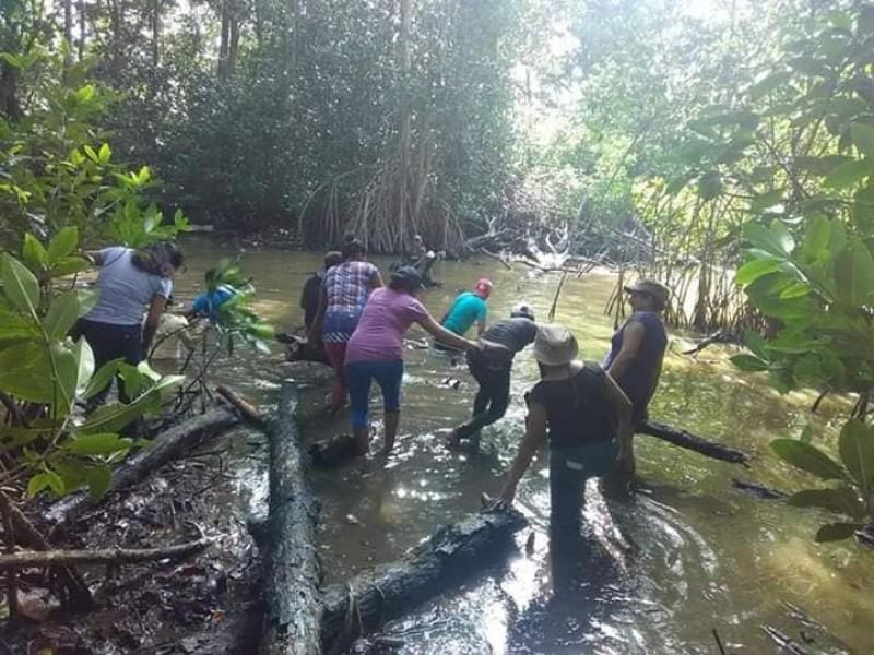Comenzará programa de conservación de manglares