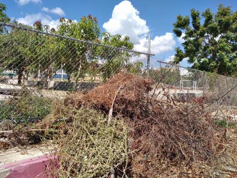 Comenzará servicios públicos a retirar ramas y cacharros de calles