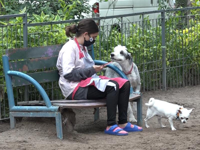 Compañía, amistad y familia: así consideran tapatíos a sus perros