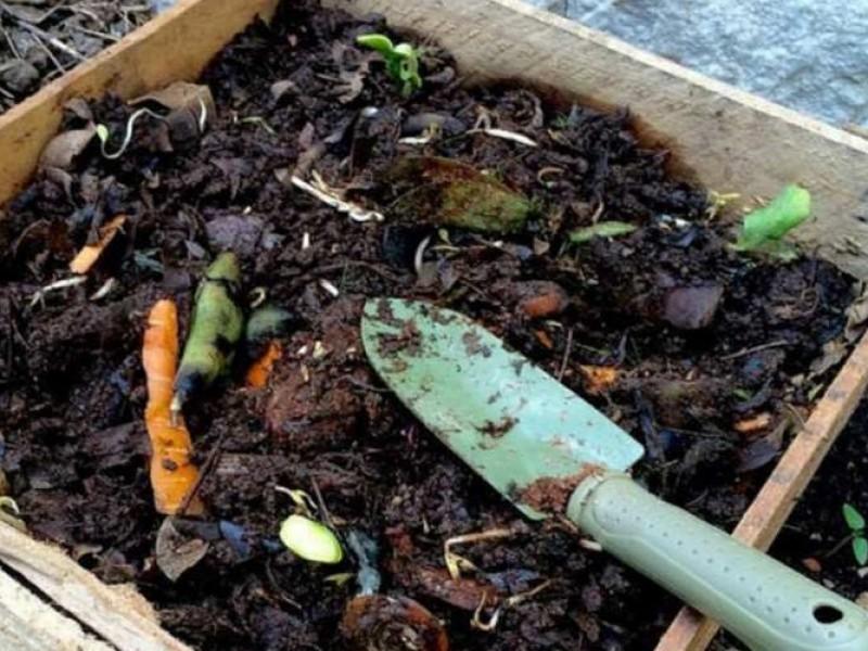 Compostaje, una forma de reducir la basura