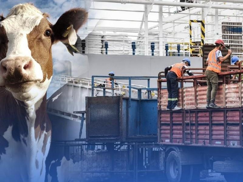 ¡Con sequía! Sonora se mantiene líder en exportación de ganado