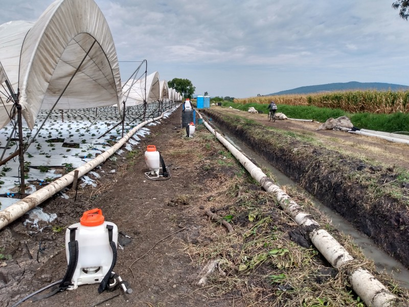 Con tecnificación buscan productores blindar sus cultivos de cambios climatológicos