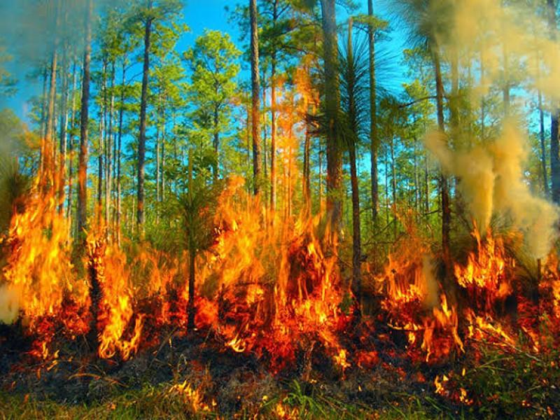 Conafor registra 12 incendios forestales en Guerrero