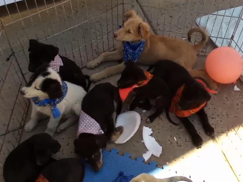 Concluye semana cultural de la mascota con 350 animales esterilizados