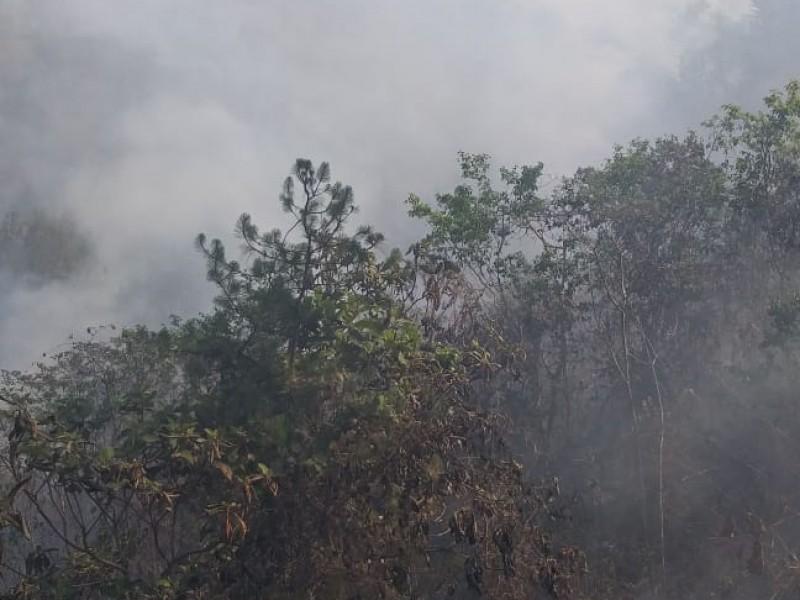 Condiciones climáticas contribuyen a evitar incendios forestales